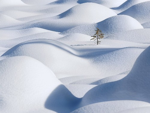 Lonely tree among Snow-hills