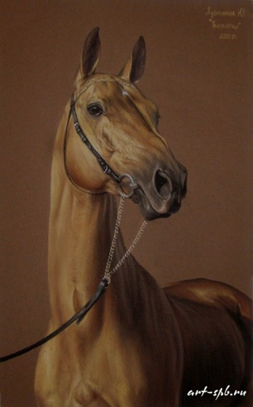 Ahalteke Tyllagush, Pastel on paper. Painting by Russian artist animalist Yuliya Dubinina