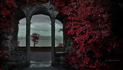 Armadale Castle, Scotland. Forest dream by Nelleke Pieters