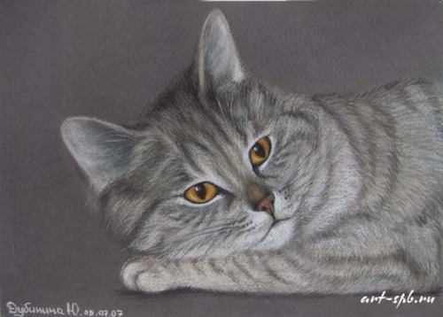Cat Mashka, Pastel on paper. Painting by Russian artist animalist Yuliya Dubinina