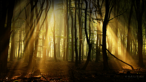 Dark Places. Photo by Dutch photographer Nelleke Pieters