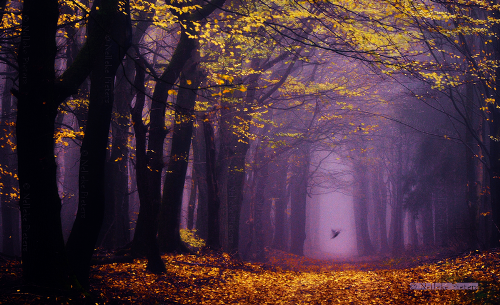 Forest Angel. Photo by Dutch photographer Nelleke Pieters