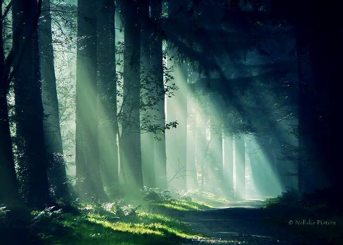 Forest dream by Dutch photographer Nelleke Pieters