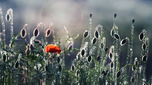 German fine art photographer Christine Ellger