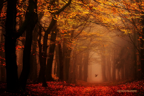 Forest dream by Nelleke Pieters