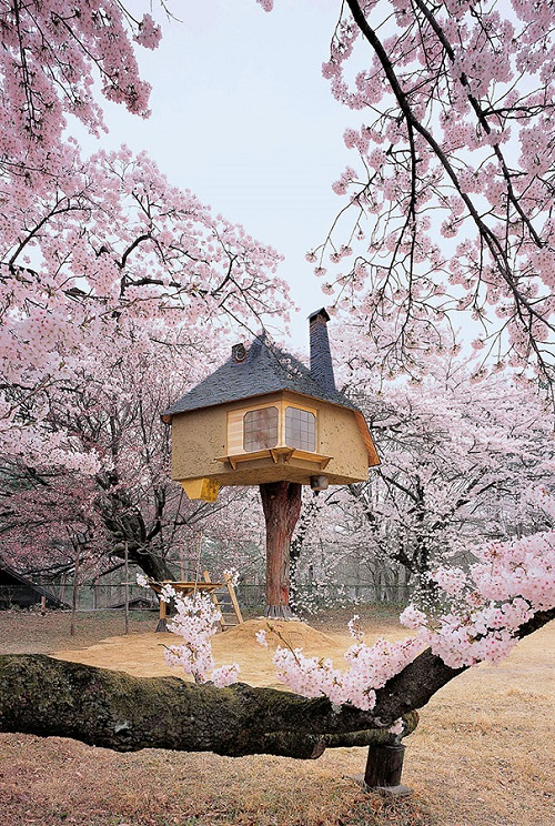 Small house on one leg among the a blooming sakura garden in Yamanashi, Japan