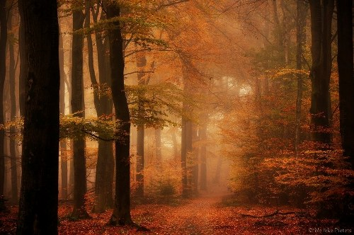 colorful Dutch autumn. Photo by Dutch photographer Nelleke Pieter