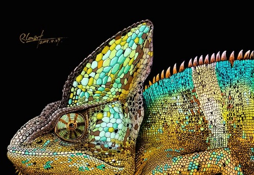 Chameleon (closeup) Realistic ink pen Illustration by Chinese artist RLoN Wang