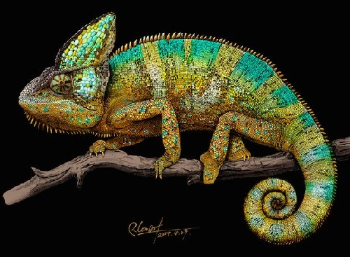 Chameleon. Realistic ink pen Illustration by Chinese artist RLoN Wang