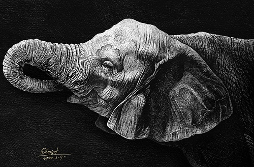 Elephant. Realistic ink pen Illustration by Chinese artist RLoN Wang