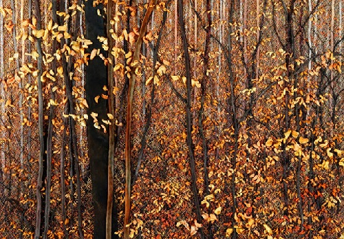 Late October Maples. Hand embroidery by American artist of applied art Martha Fieber