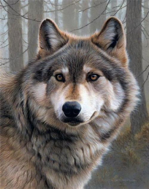 Painting by British Wildlife artist and naturalist Andrew Hutchinson