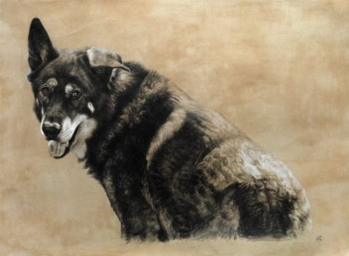 animal portraits by Cristina Penescu