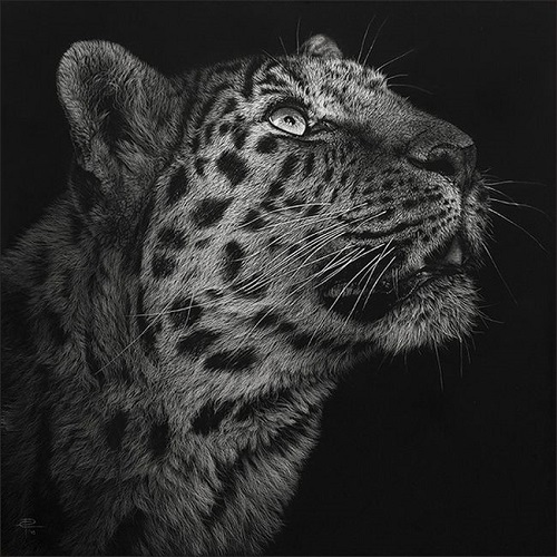 Realistic animal drawing by Romanian artist Cristina Penescu