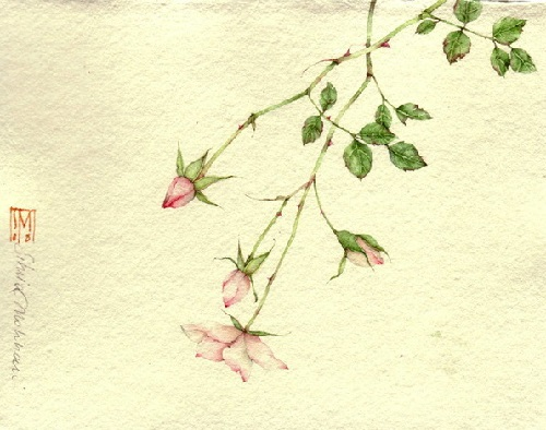 Delicate Watercolors by Silvia Molinari
