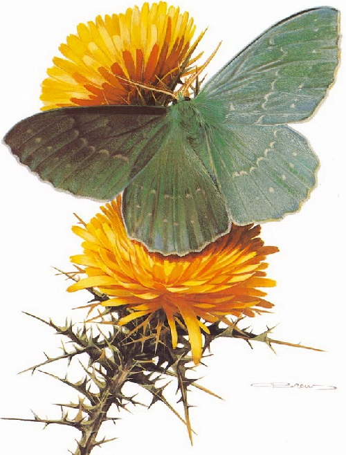 Butterfly symbolism. Geometra papilionaria. Painting by Carl Brenders