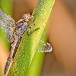 Insects in dewdrops by French amateur photographer David Chambon