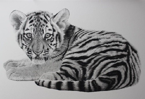 Precious. pencil drawing by Clive Meredith