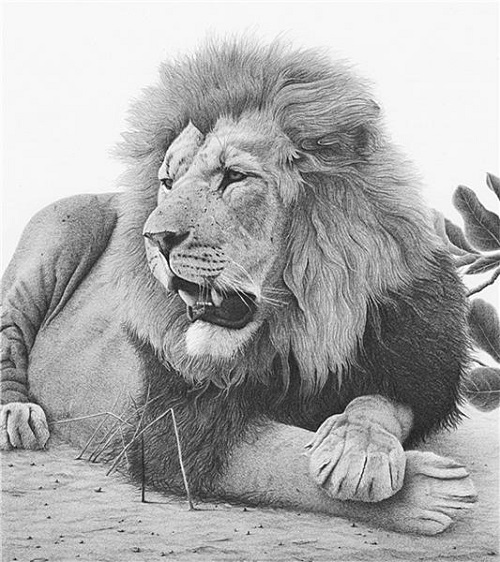 Majestic. pencil drawing by Clive Meredith