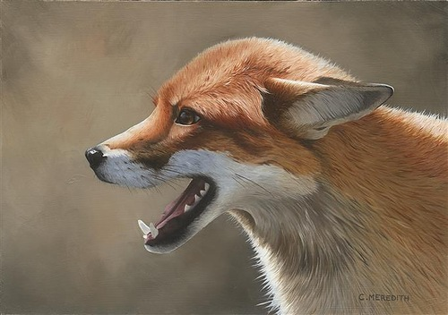 Realistic oil painting by British wildlife artist Clive Meredith