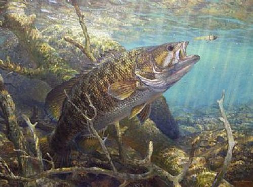 Smallmouth Bass. Bronze & Brown (2006). Underwater world and fish in painting by American artist and fisherman Mark A. Susinno