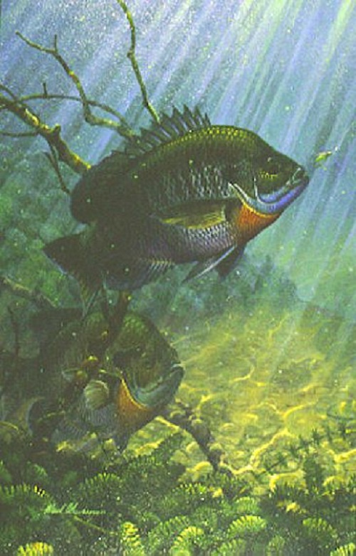 Sun Dancers (1990) Bluegills. Underwater world and fish in painting by American artist and fisherman Mark A. Susinno