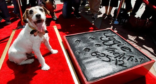 Uggie pawprints immortalize in cement