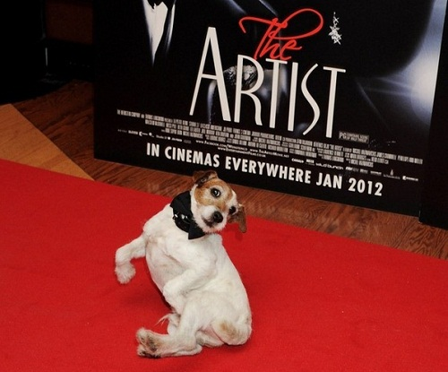 Uggie walked the red carpet along with the rest of the cast