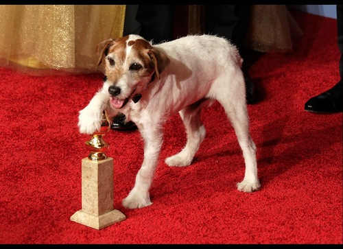 Uggie won the Palm Dog Award for best performance by a canine at the 2011 Cannes Film Festival