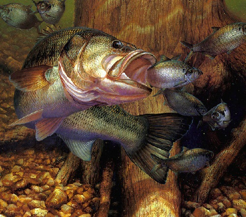 Underwater world and fish in painting by American artist and fisherman Mark A. Susinno