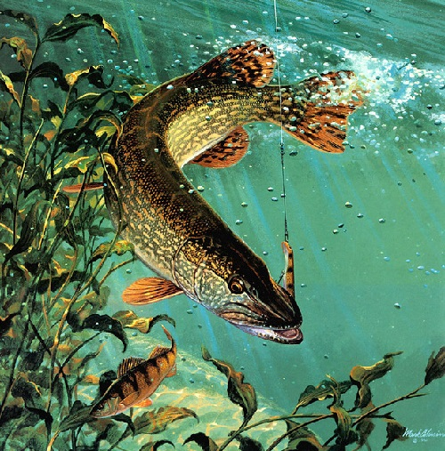 Underwater world and fish in painting by American artist and Fisherman painter Mark Susinno