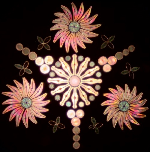 Victorian art of diatom arrangement, made by British biologist Klaus Kemp (print-screen)