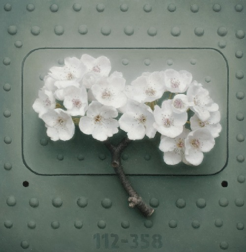 'Blossom I', oil on board. Hyperrealistic painting by Patrick Kramer