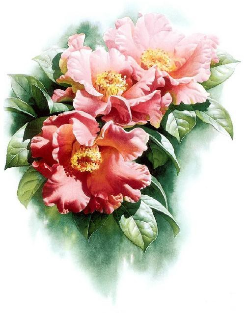 Camellia reticulata. Botanical Watercolor painting by Chinese artist Zeng Xiao Lian
