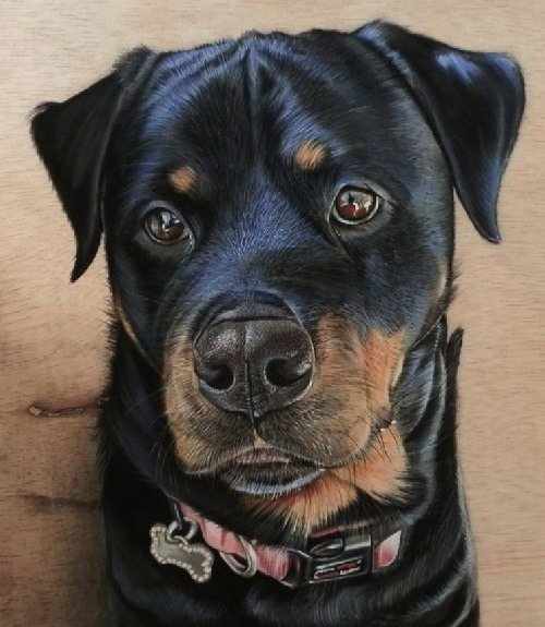 Rottweiler drawing. Pastel on wood. Hyperrealistic drawing by Singaporean artist Ivan Hoo