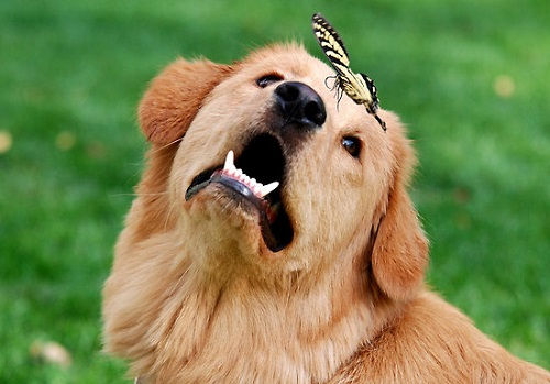 A dog and butterfly. American fine art nature photographer Christina Rollo