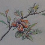 Blossoming quince. Painting by Moscow based Elina Forget-me-not