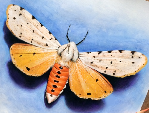 Colored pencil moth sketch with a watercolor background