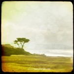 Montara Creek Fine Art Photography