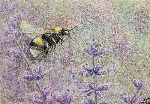 Lavender bumblebee. Pencil drawing