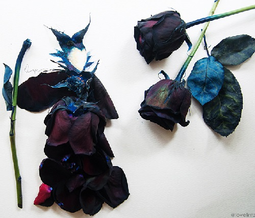 Maleficent, black dyed rose and watercolor on paper, 2014. Watercolor and flower petals art by Singaporean artist Lim Zhi Wei