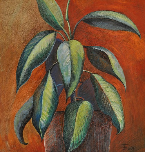 Painting 'Ficus'