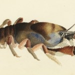Marine creatures in painting by William Buelow Gould