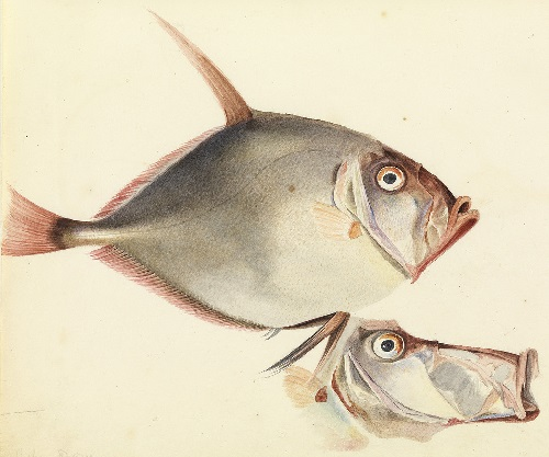 Painting by William Buelow Gould