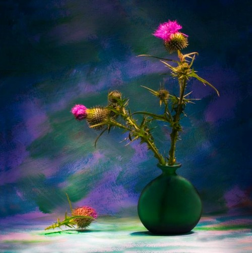 Still life photograph by Vasily Cheshenov