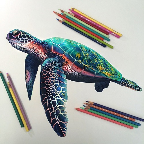 Turtle. colored pencils. Illustrator Morgan Davidson