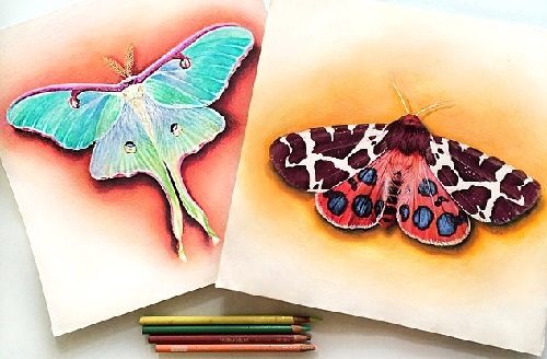 Moth sketches. Illustrator Morgan Davidson