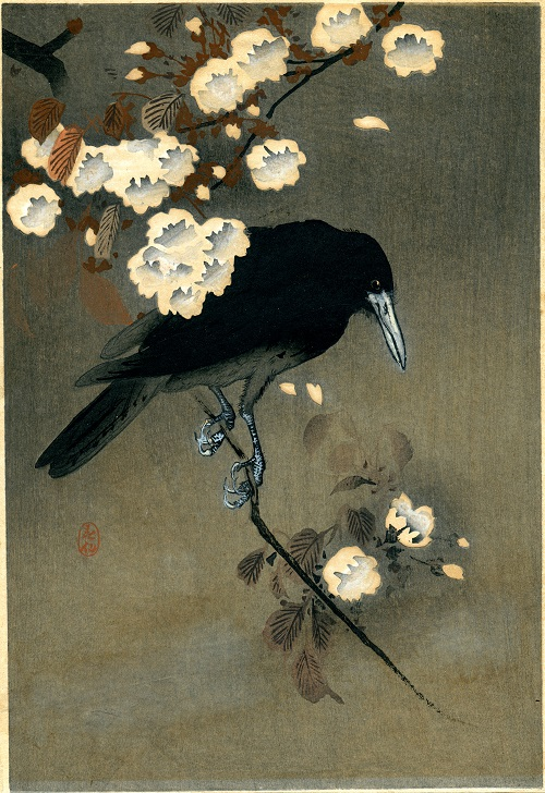 A crow and blossom. Bird-and-flower painting by Ohara Koson