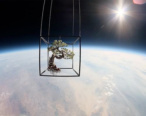 2014 in art. Japanese artist Makoto Azuma has launched into space a bouquet of flowers and a bonsai tree