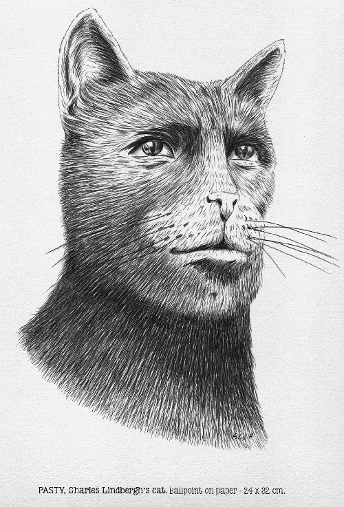 Patsy. Charles Lindbergh's cat. Ballpoint on paper. Drawing by BL67